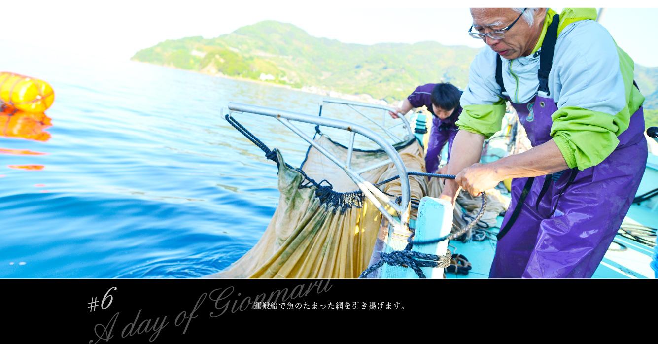 運搬船で魚のたまった網を引き揚げます。